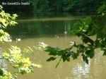 étang de Ste Perrine